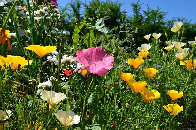 Free nature flowers wild sunshine beautiful summer