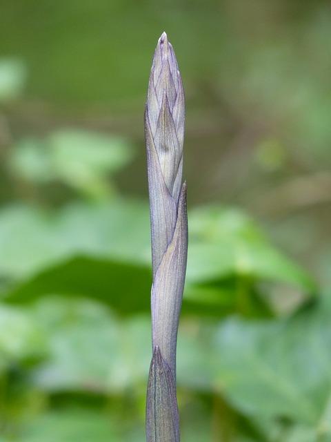 Free scion engine stalk sprout plant