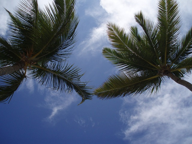 Free palms caribbean sky nature