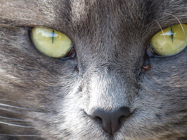 Free animal cat feline furry