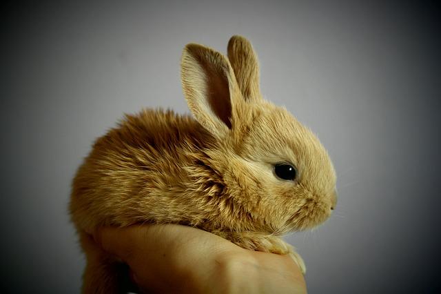 Free rabbit palm hand chytnutí redheaded ears