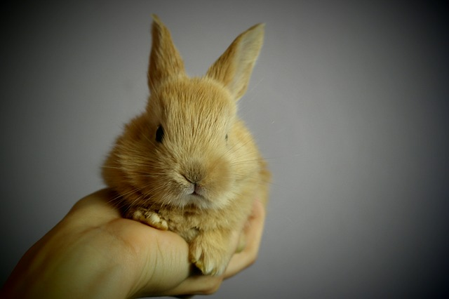 Free rabbit ears hand possession of small palm