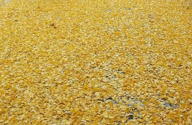 Free yellow autumn leaf foliage