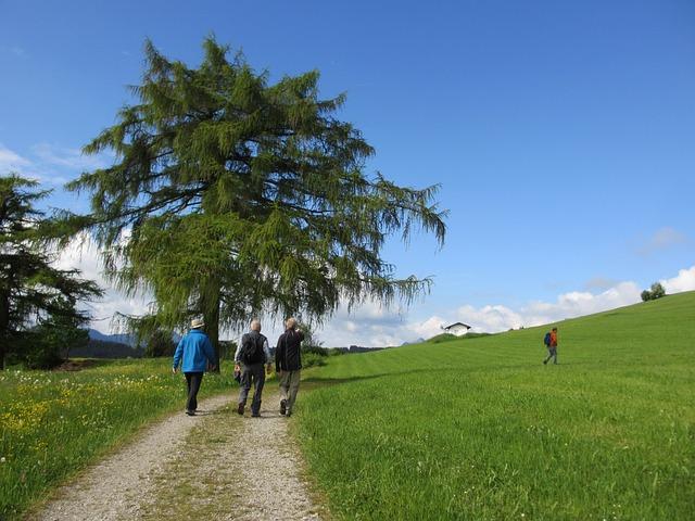 Free tree larch wanderer away meadow sky blue