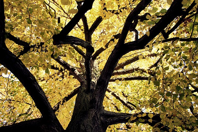Free tree crown nature leaves branches green canopy