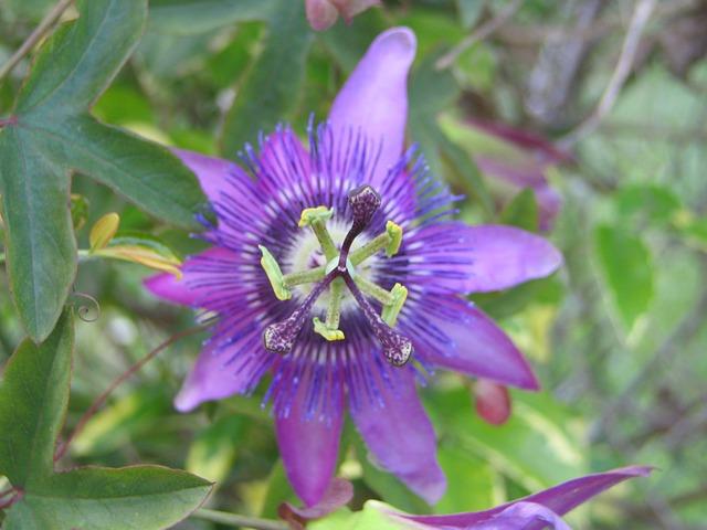 Free flowers nature plant flowering vegetation