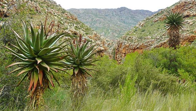 Free gorge rock canyon mountains landscape palm trees
