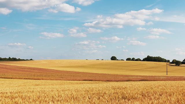 Free cornfield wheat fields field wheat campaign