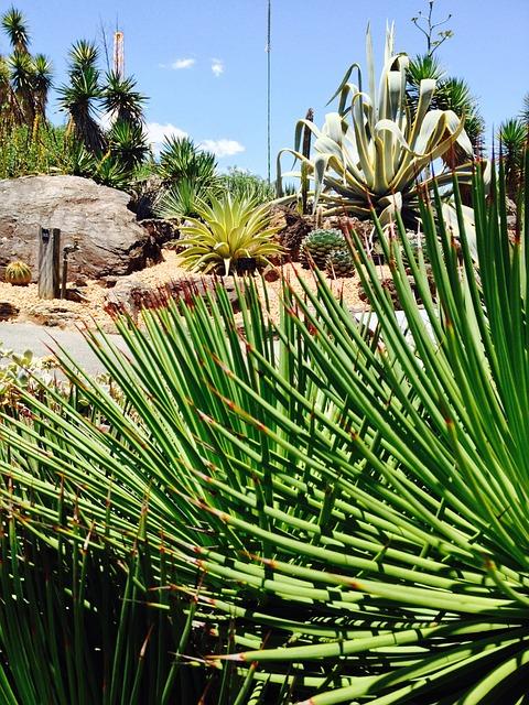 Free Photos: Garden plant cactus | Michael Yule