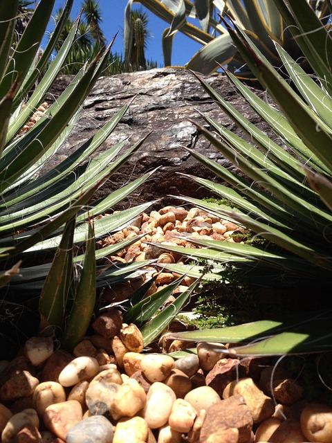 Free cacti plant se green nature grow sharp closeup