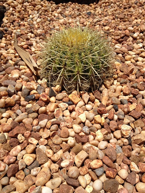 Free cactus plant desert cacti botanical summer spike