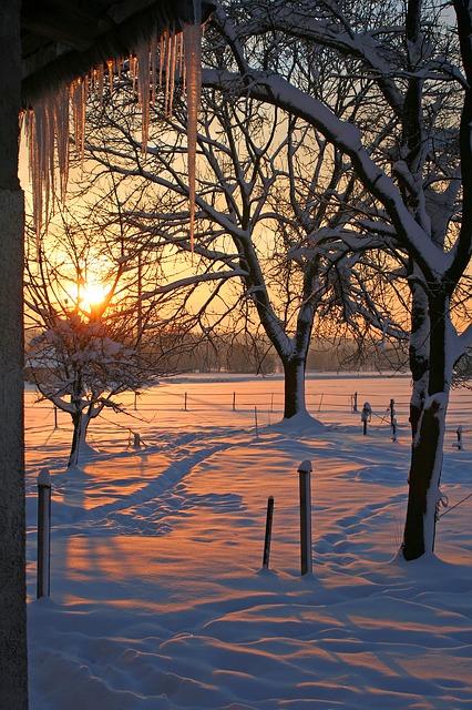 Free sunrise snow icicle winter trees sun light red