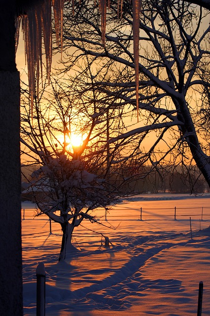 Free sunrise snow icicle winter trees sun light red