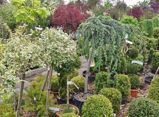 Free nursery flower trade plant trade botany plant