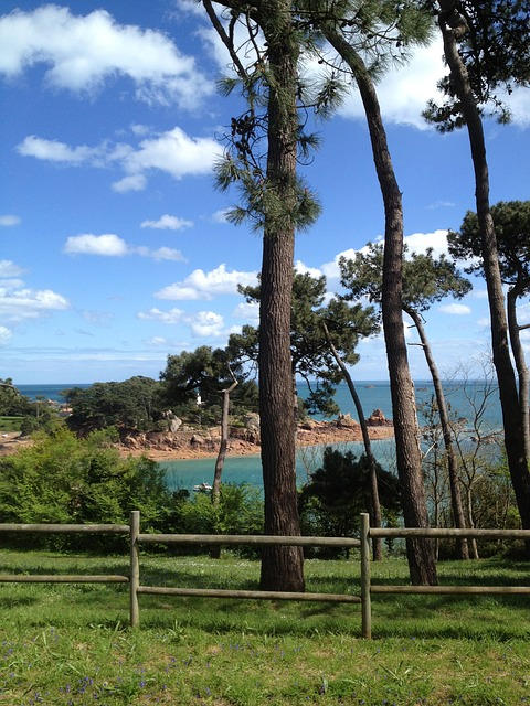 Free sea tree landscape sun side brittany island