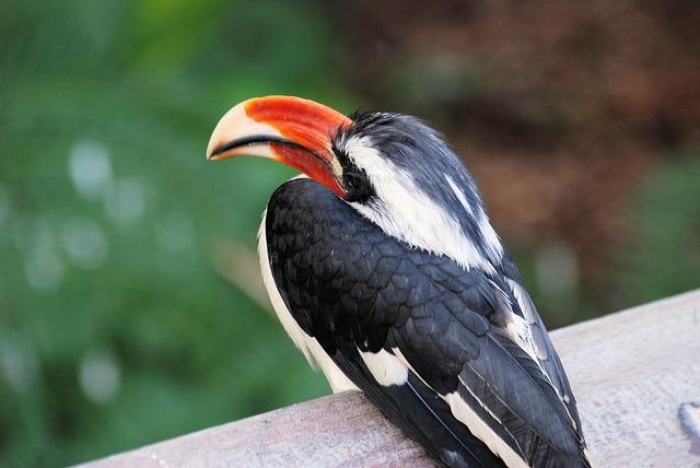 Free hornbill bird tropical beak bill colorful feather