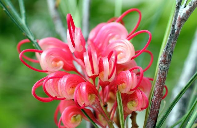 Free lipari flower pink nature colorful