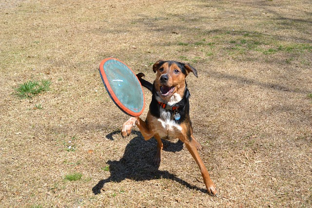 Free dog frisbee fetch jump canine animal pet fun