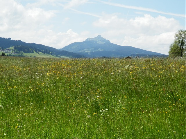 Free meadow allgäu greened panorama mountains outlook