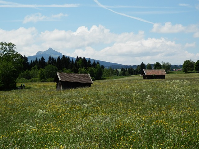 Free meadow allgäu greened panorama mountains flowers