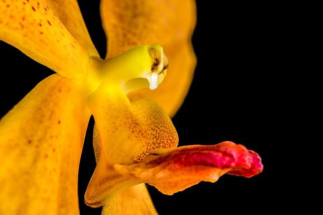 Free orchid flower orange