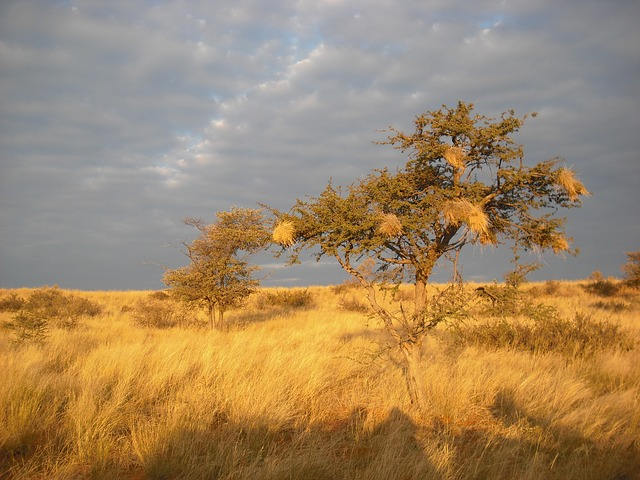 Free savannah africa tree sunset drought