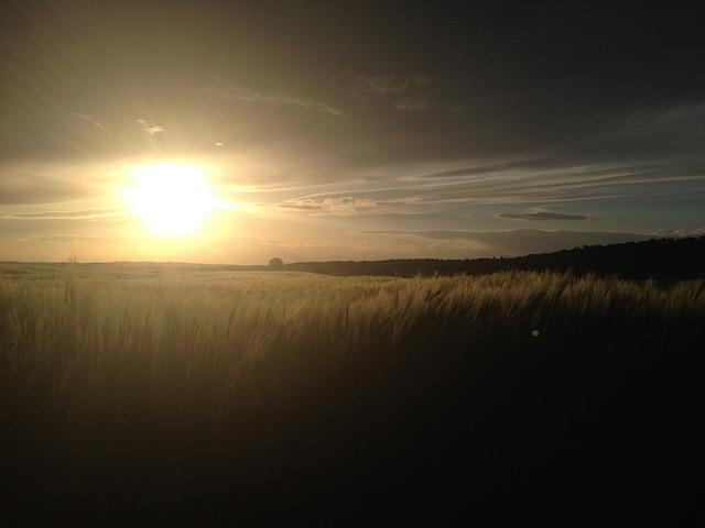 Free cornfield cereals sun sunset field evening clouds
