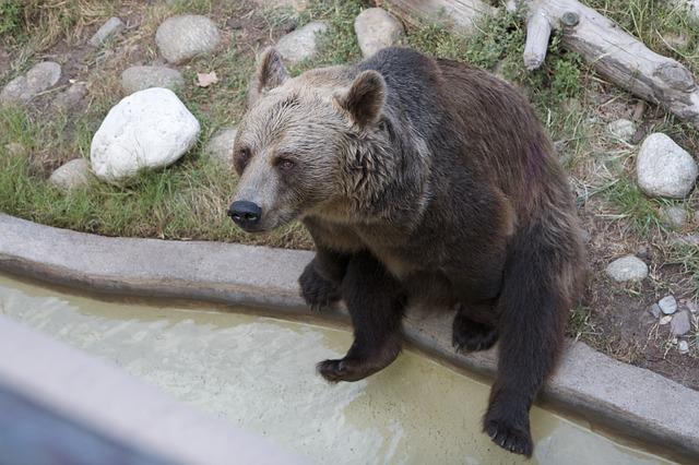 Free bear sitting brown animal
