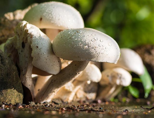 Free mushroom nature white raindrop