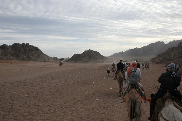 Free egypt adventure camel desert africa