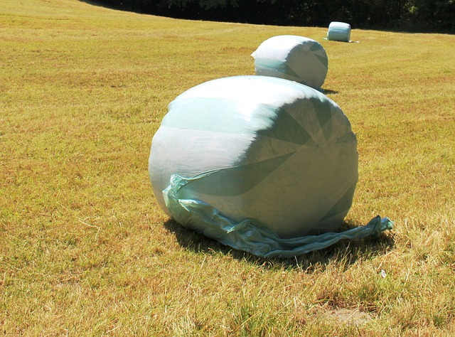 Free hay round bales wrapped up food stock