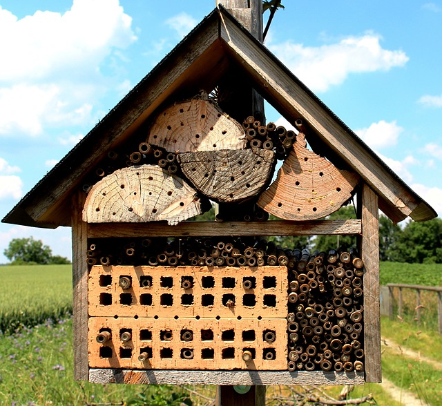 Free bees wild bees bee house protection of species nest