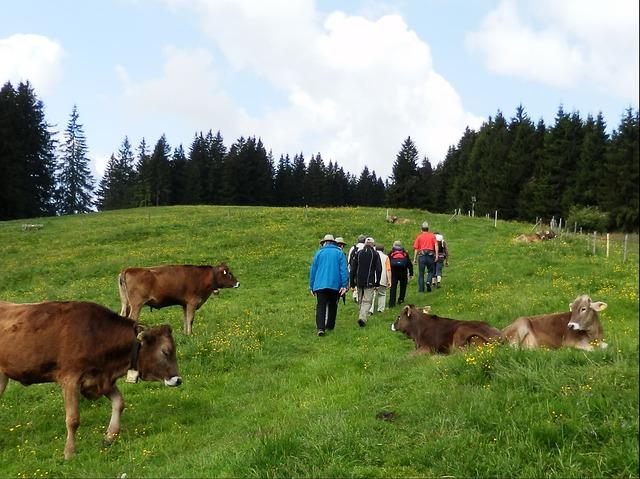 Free wanderer allgäu hiking mountain hike