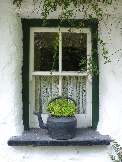 Free window irish green flower window sill