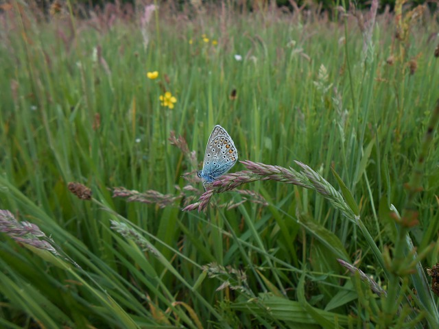 Free blue butterfly spring