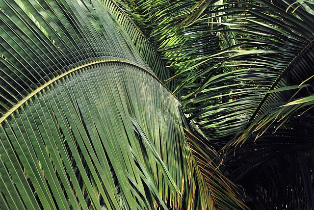 Free leaves plants green palm spread palm leaf