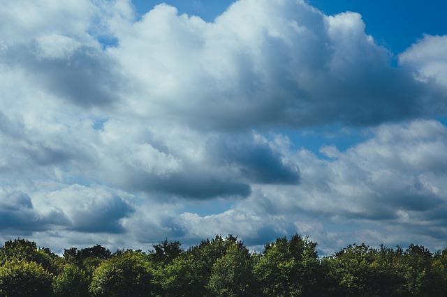 Free forest foliage sky clouds weather grunge dark