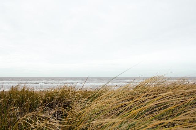 Free grass beach ocean windy cloudy gray sea