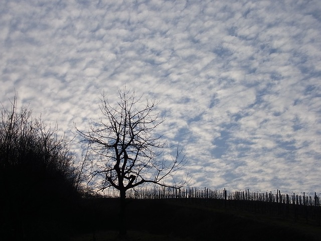 Free tree sky nature clouds mood rest