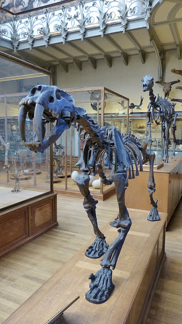 Free animal urtier tiger saber-toothed tiger skeleton
