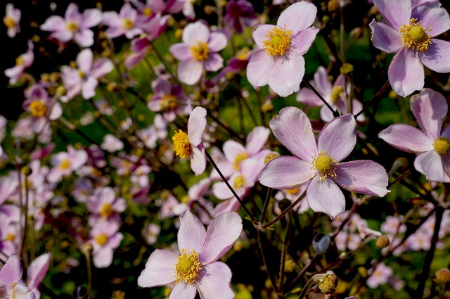 Free flowers bloom pink flowers nature spring blossom