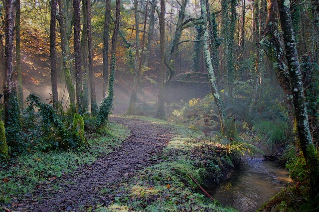 Free Photos: Nature forest hiking road trees   xurxog