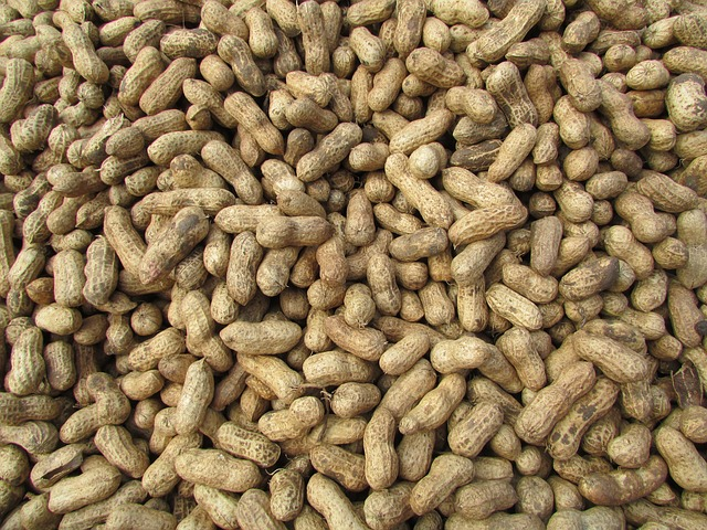 Free peanut ground nuts bangalore india