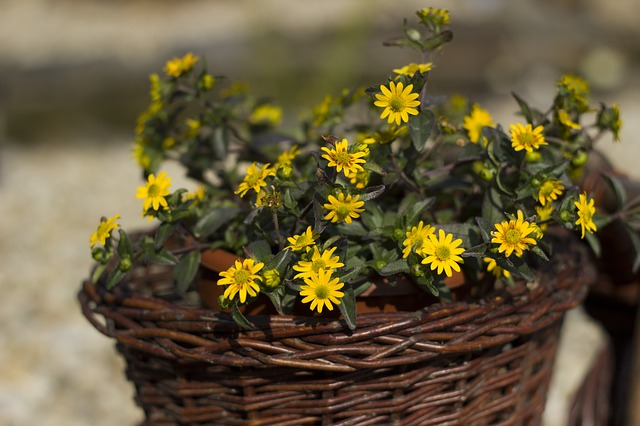 Free basket yellow flowers nature tickets
