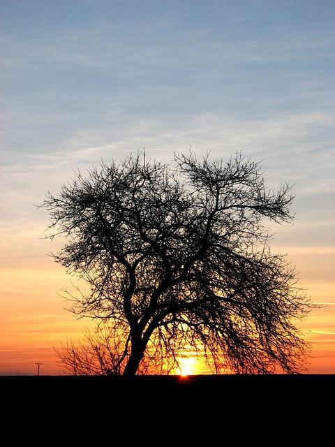 Free dusk sunset wood in the evening sky light