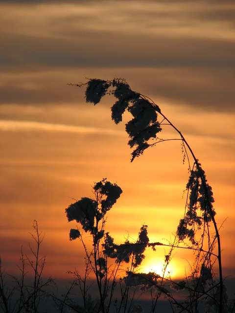 Free sunset plant nature dusk light in the evening