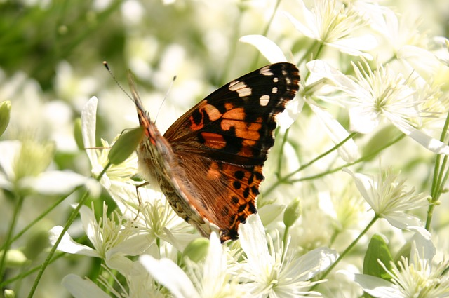 Free butterfly summer closeup macro nature floral