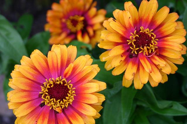 Free flower floral botanical closeup macro summer pink