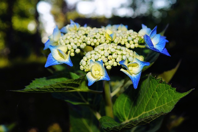 Free flower blue close flower garden idyll