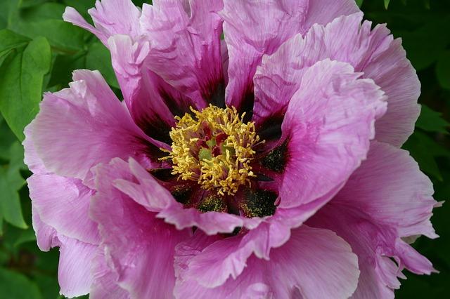 Free flower pink closeup floral nature beauty macro